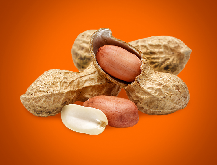 Roasted peanuts are the predominant flavour of our delicious Peanut Koekies